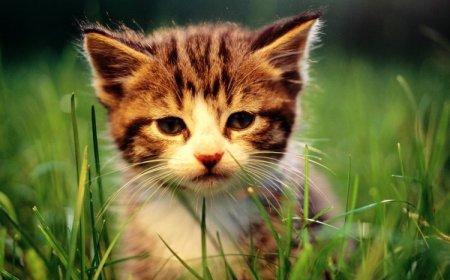 Я - кошка!