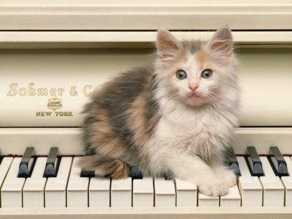 Пушистые котятки