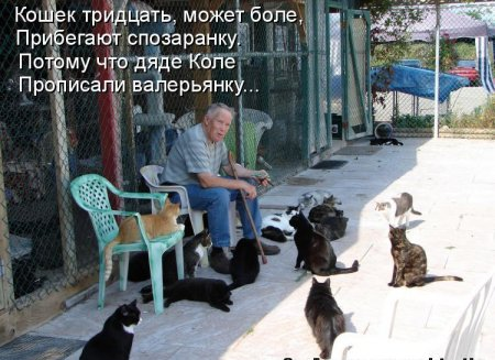 Их жизни кошек...