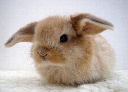 Пуховый комочек. Кролики