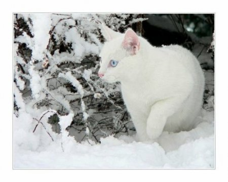 Цвет белого снега 1970
