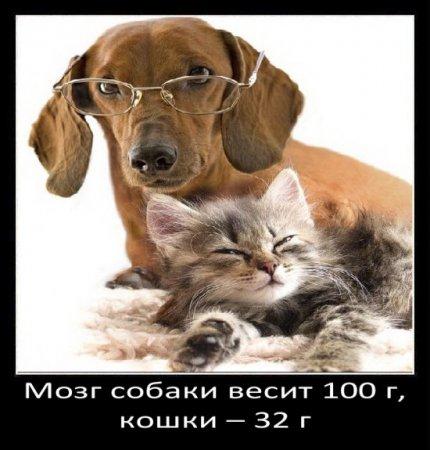 Немножко о собаках