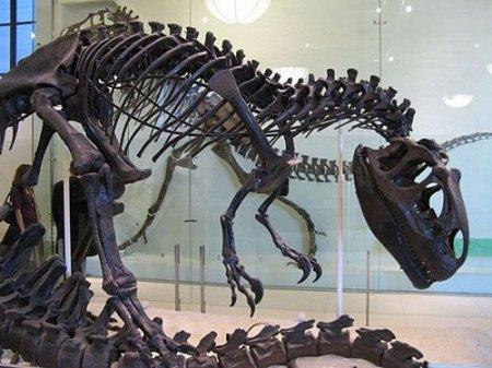 О динозаврах, глазах человека и рыбных дождях