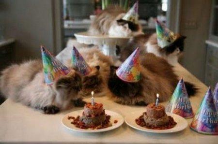 Кошачьи дни рождения