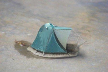Тюнинг животных в фотошопе