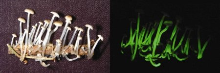 Интересные виды животных и грибов, открытых в 2010 году