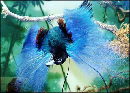 Интересные факты о крылатых
