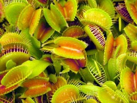 10 странных растений