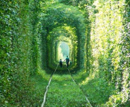 Тоннель любви в местечке Клевань, Украина