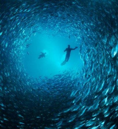 Удивительные косяки рыб