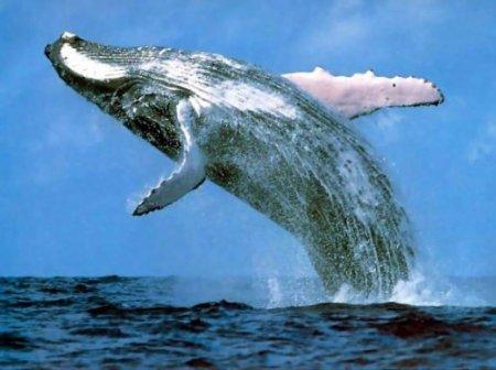 Лучшие места, где можно встретить китов