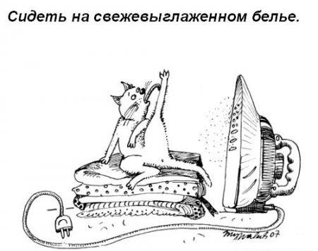 Что должна уметь каждая кошка