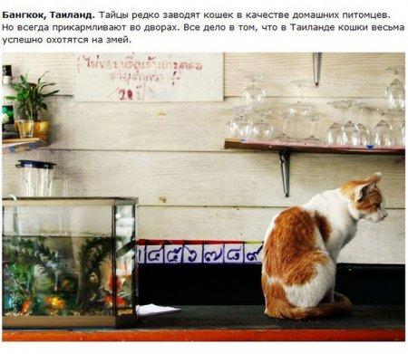 О жизни котов в разных странах