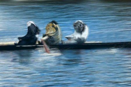 Морские свинки на Олимпийских играх в Лондоне