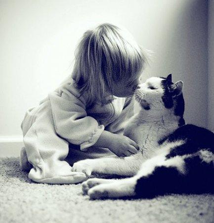 Малыши и коты