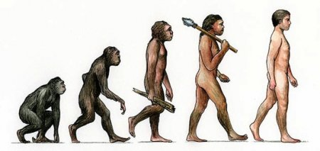 15 главных заблуждений об эволюции