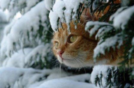 Зимние птицы и звери