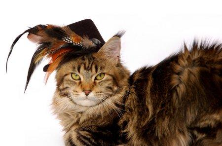 Кошки в шляпках